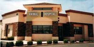 animal hospital construction completed photo