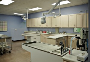 construction for animal hospital interior
